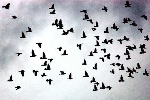 'Flock of birds', de Eugene Zemlianskiy